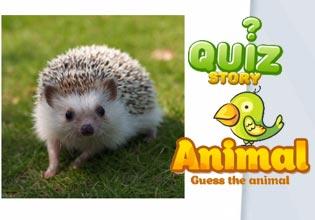 Quiz Story - Animal