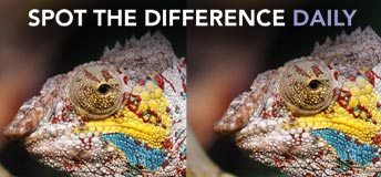 Image for Spot The Difference Daily game